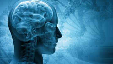 Human Brain1 Dollarphotoclub_
