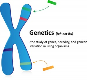 Chromosome carrying genetic information in the form of genes.- Dollar pics