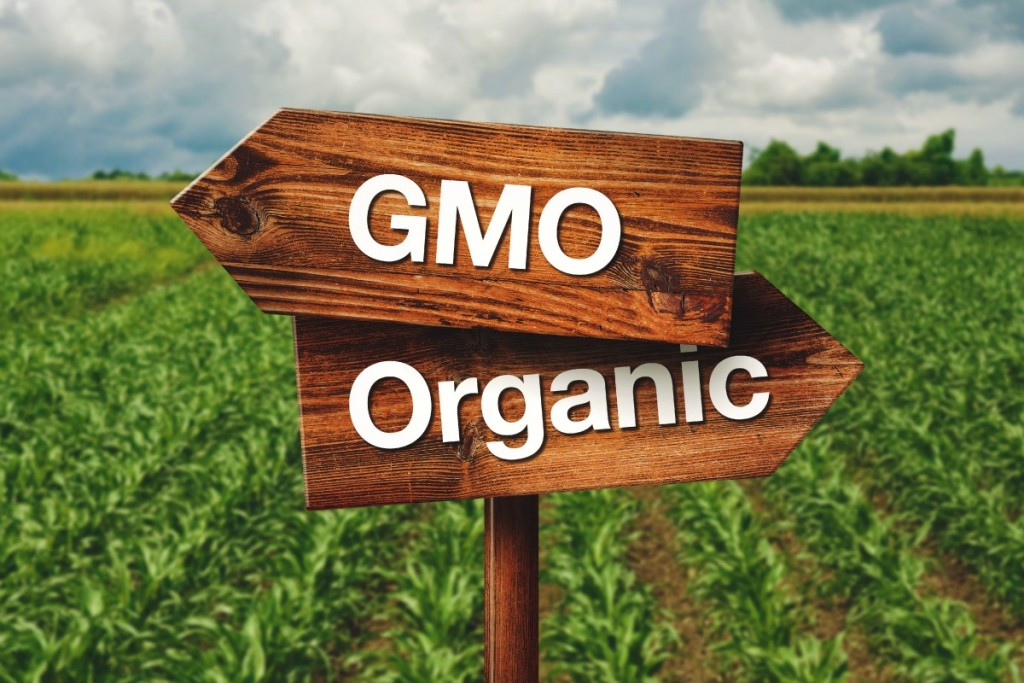 Gmo or Organic Farming Wooden Direction Sign in Agricultural Field