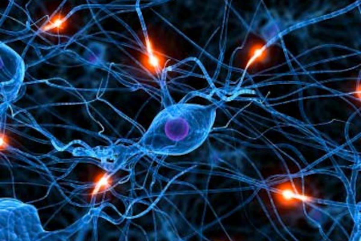 Are Stem Cells The Future Of Medicine?