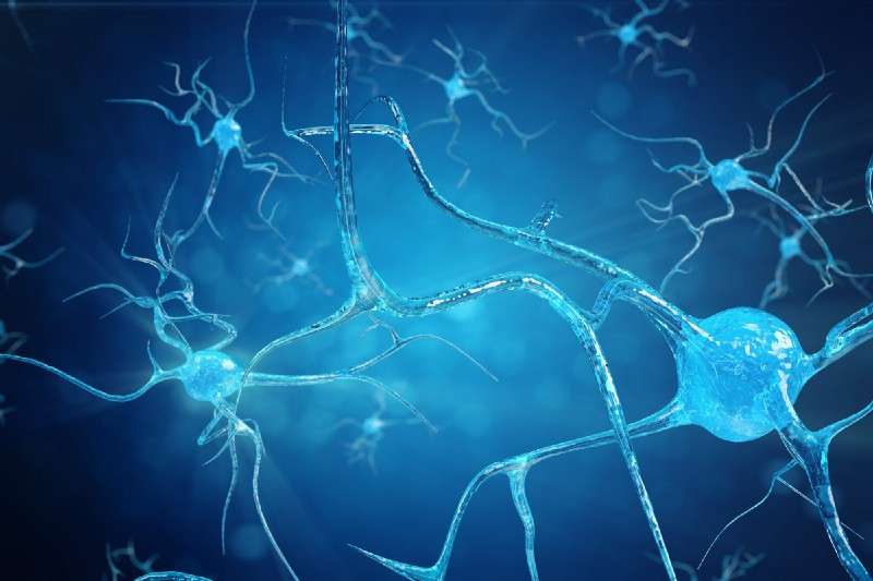 Neuroplasticity-Brain-neural-pathways-can-be-created-as-you-age